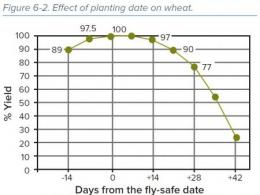 wheat planting date graph